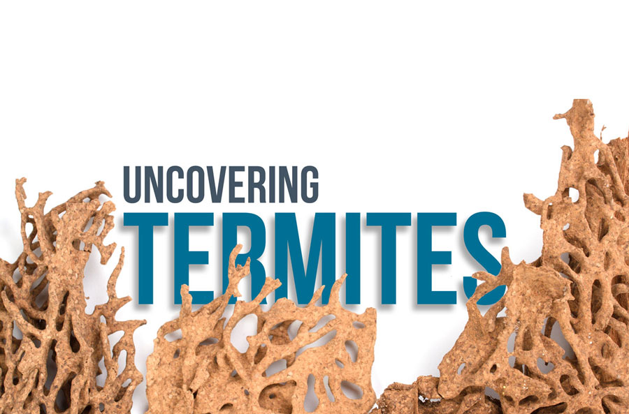 "damaged wood surrounding the phrase ""uncovering termites"""